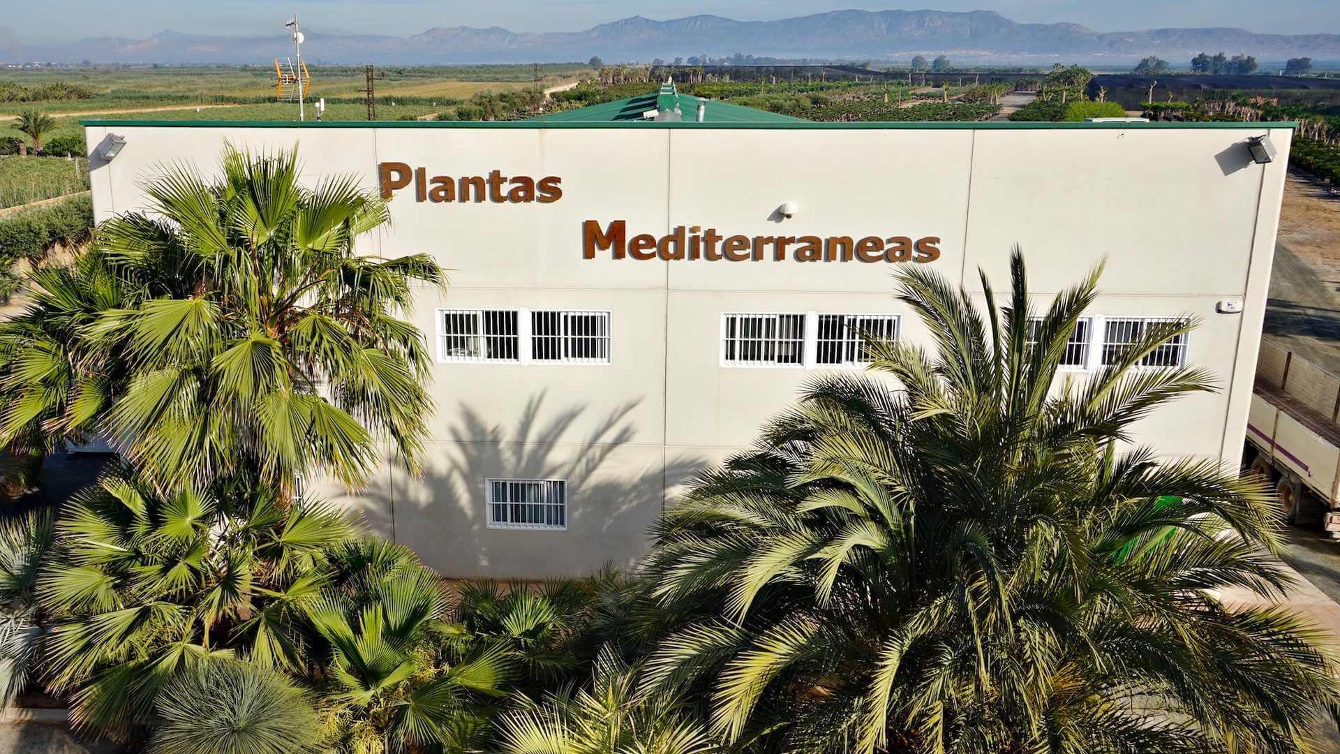banner plantas mediterraneas
