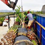 carga camion plantas