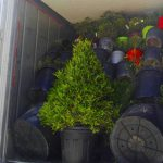 carga contenedor mix plantas