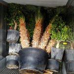 carga contenedor plantas