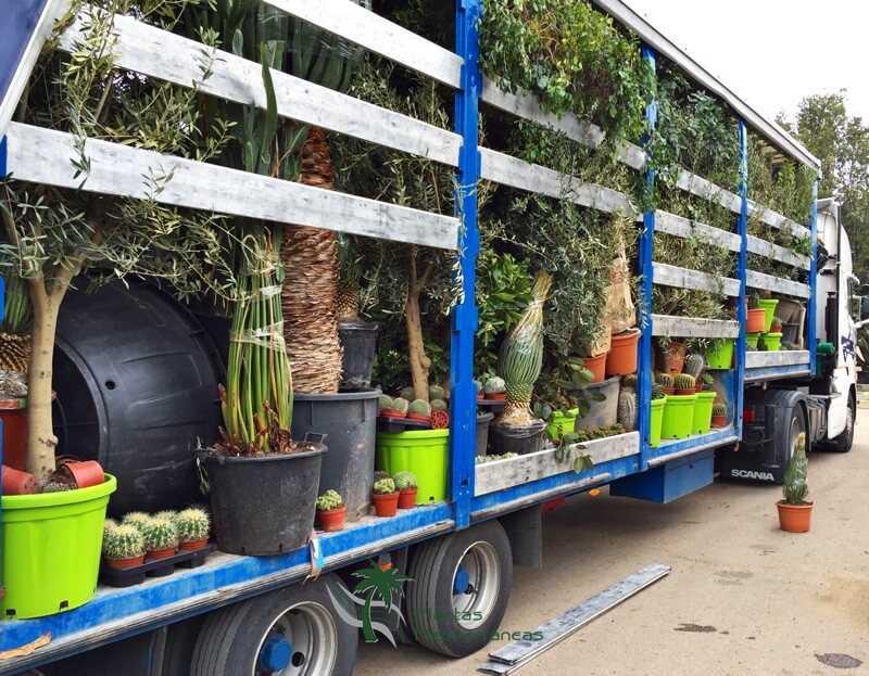 carga mix plantas