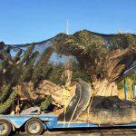 embalaje carga gondola olivo