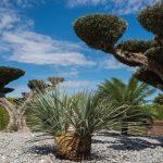 Jardín privado en Elche