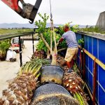 plants truck loading