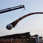 washingtonias crane loading