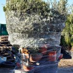 plants mix pallet packaging