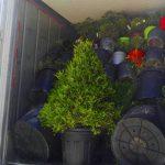 Chargement conteneurx mix plantes