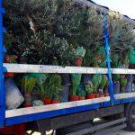 Chargement mix plantes
