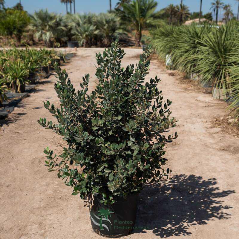 Arbustos y plantas mediterráneas