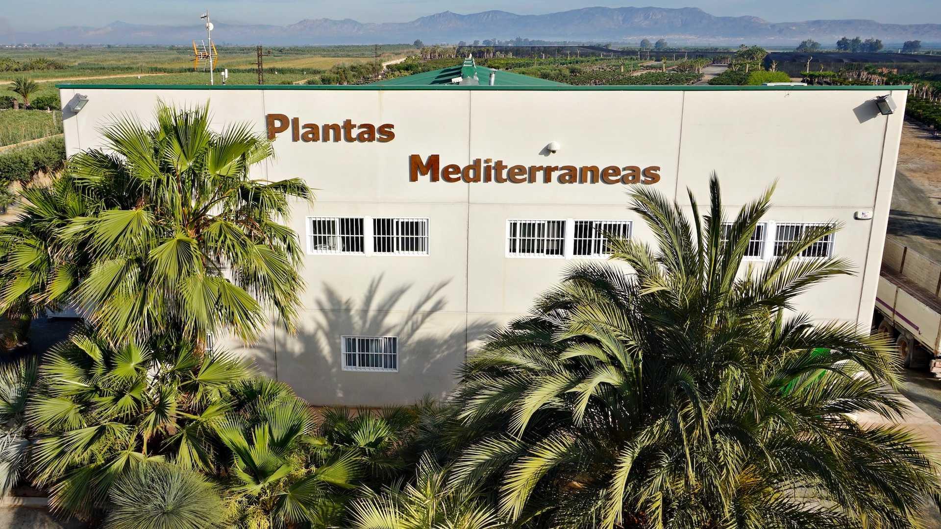 oficinas-plantas-mediterraneas