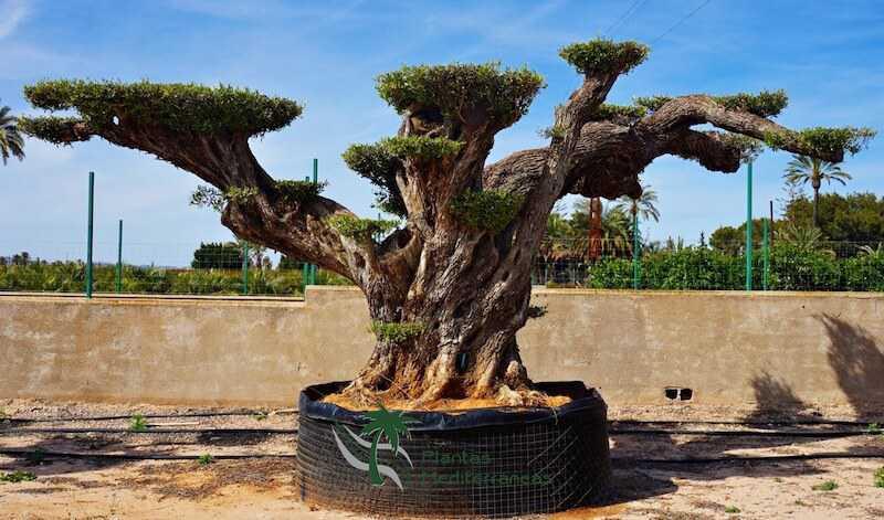 olivier millenaire