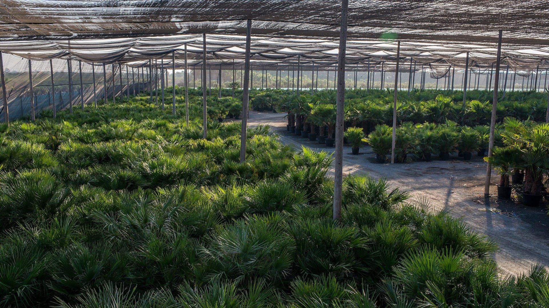 ombraculo-plantas-mediterraneas-web
