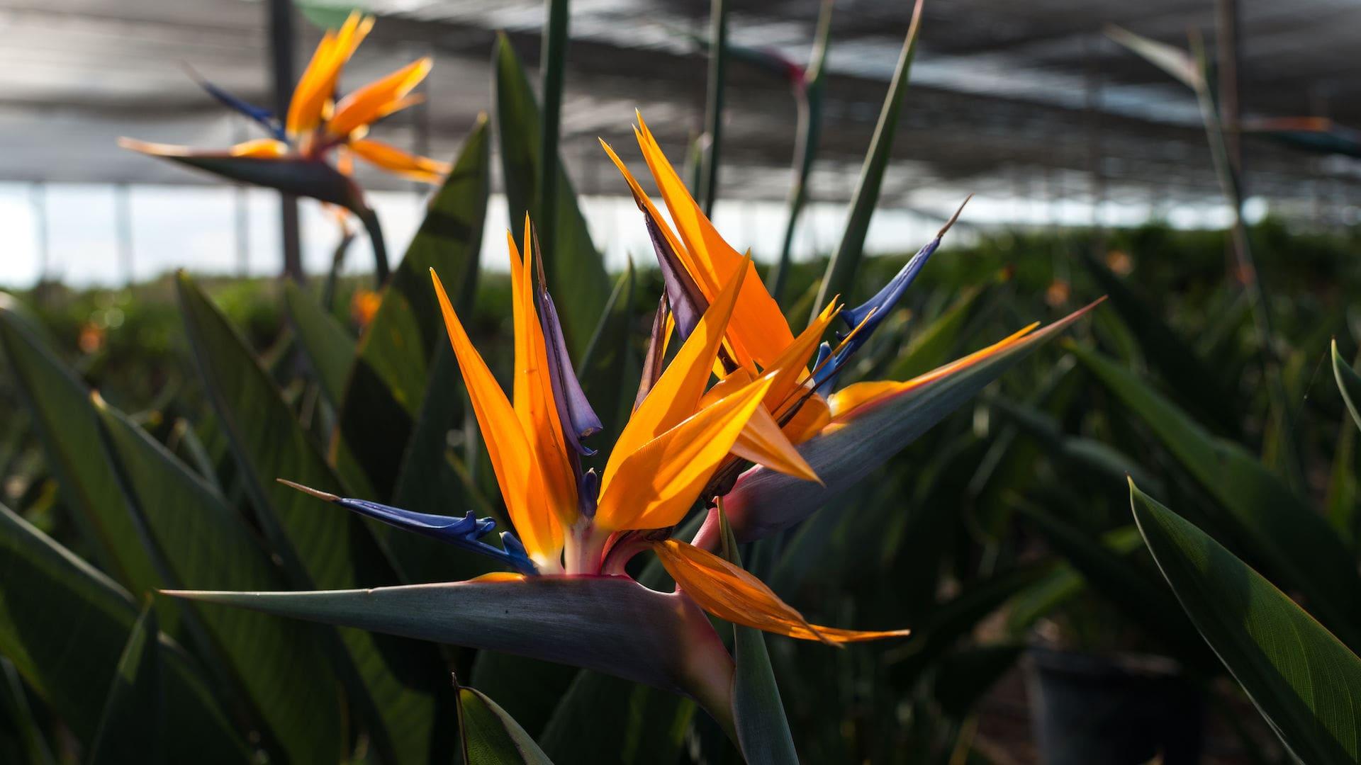 planta-mediterranea-web