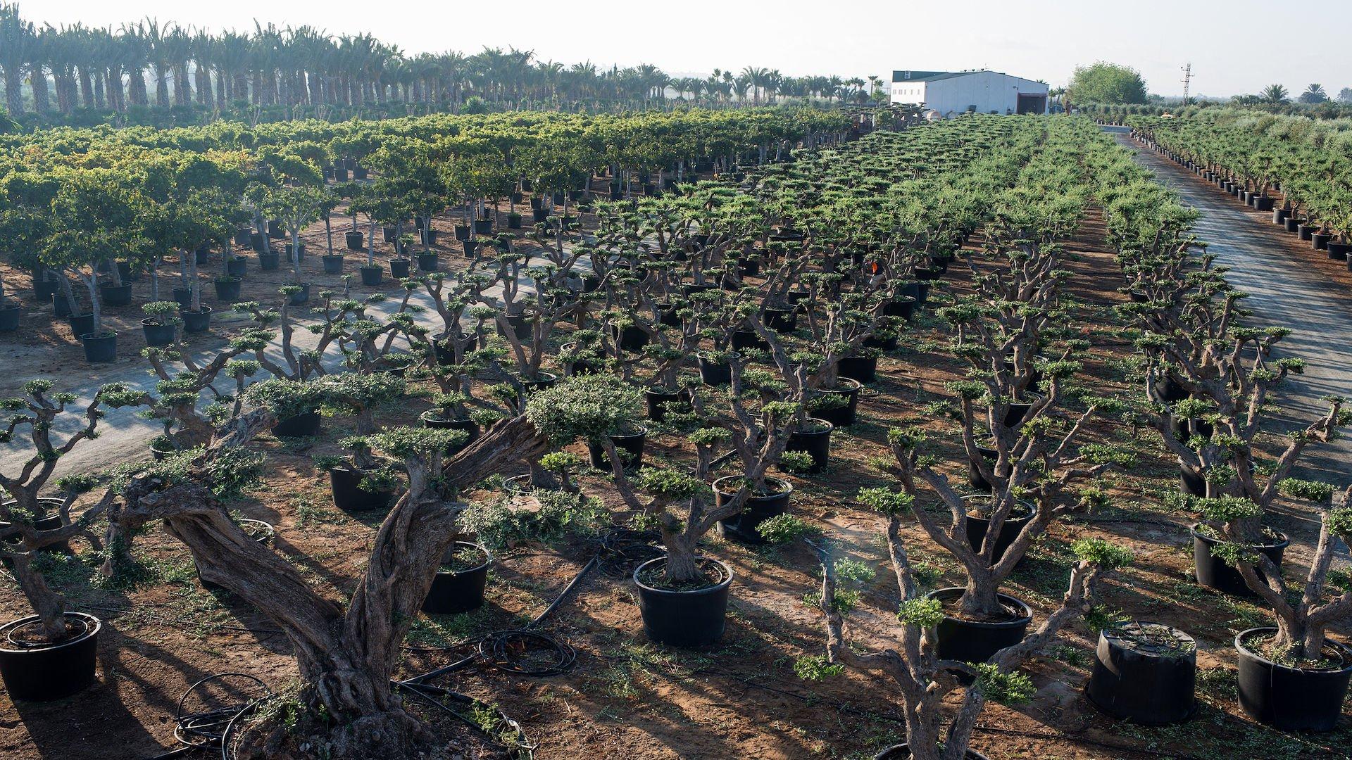 vista-vivero-plantas-mediterraneas-web
